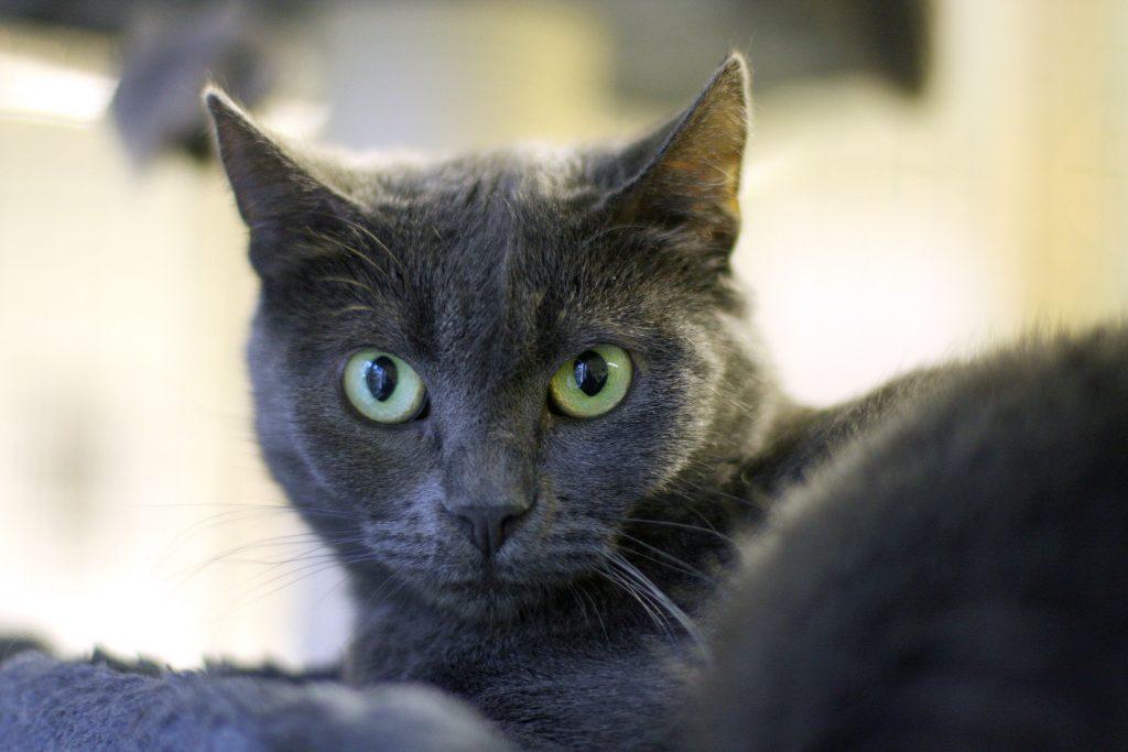 Katten Granit
