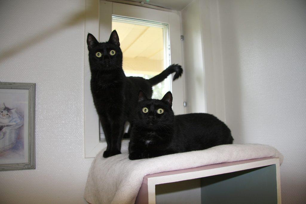 Katterna Smillan och Smulan