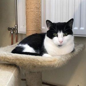 Bild på katten Flinga