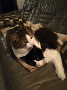 Hälsning från katterna Jessie och Bessie