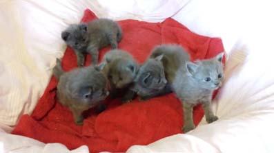 Kattungar som omplacerades 2014