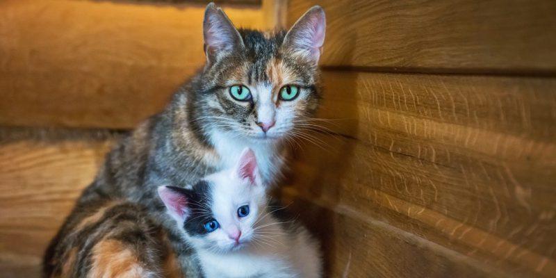 Katt med unge