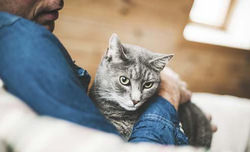 Katt i människas famn