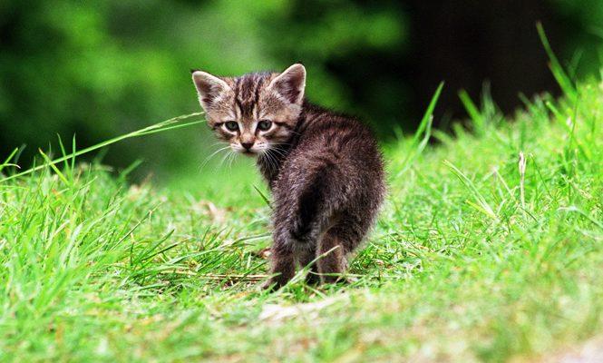 kattunge ensam i skogen