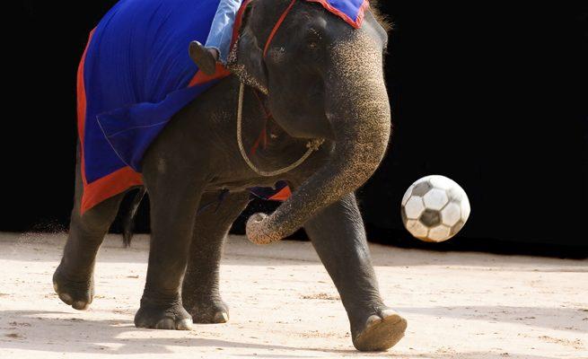 Elefant med boll