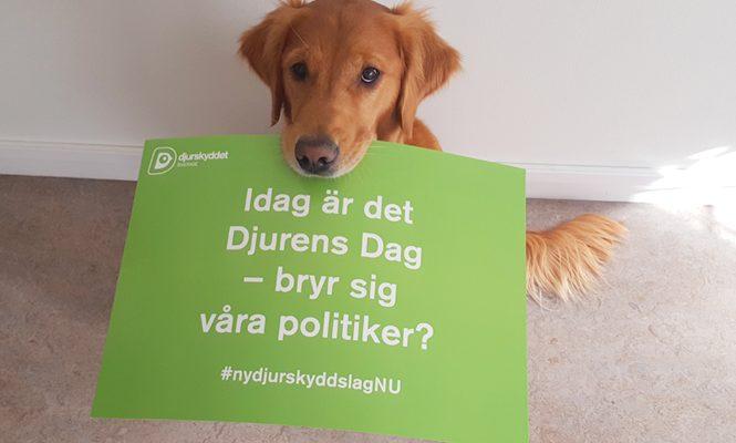 "Hund med skylt, text: ""Idag är det Djurens Dag - bryr sig våra politiker? #nydjurskyddslagNU"""