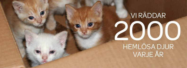 "Kattungar, Text: ""Vi räddar 2 000 hemlösa djur varje år"""