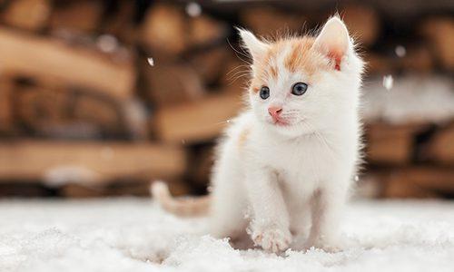 Kattunge i snön