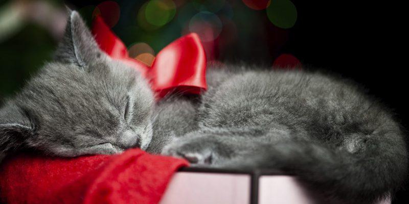 Dating hem sida för katter